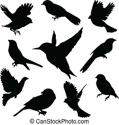 conjunto, birds., vector
