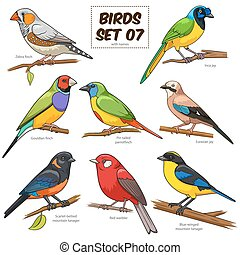 conjunto, colorido, ilustración, caricatura, vector, pájaro