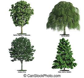 conjunto, de, árboles, aislado, blanco