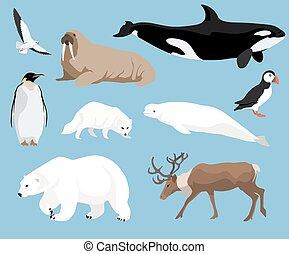 conjunto, de, ártico, animales
