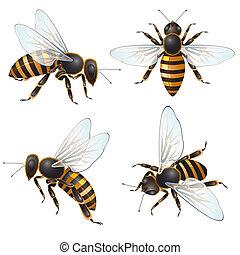 conjunto, de, abeja