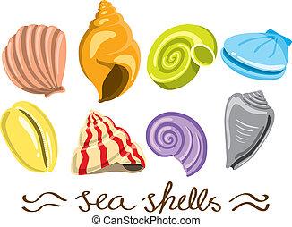 conjunto, de, colorido, conchas de mar