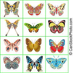 conjunto, de, decorativo, mariposas, en, un, fondo blanco