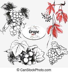 conjunto, de, dibujos, uva