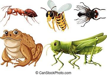 conjunto, de, diferente, clases, de, insectos