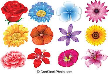conjunto, de, diferente, flores