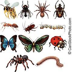 conjunto, de, diferente, salvaje, insectos