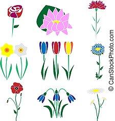 conjunto, de, el, más, común, flowers.
