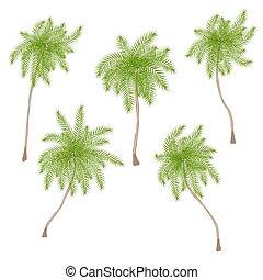 conjunto, de, estilizado, árboles de palma, aislado, blanco