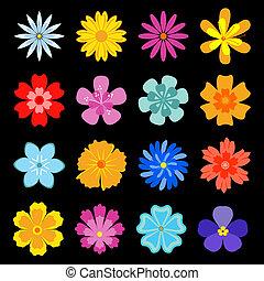 conjunto, de, flor, flores