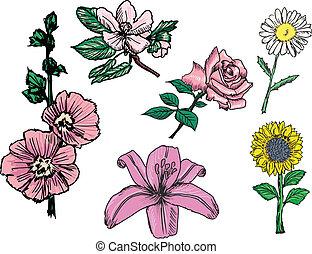 conjunto, de, flores