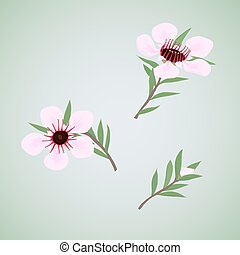 conjunto, de, flores, manuka
