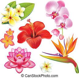 conjunto, de, flores tropicales