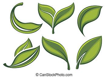 conjunto, de, hojas verdes