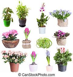 conjunto, de, houseplants, en, un, fondo blanco