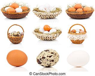 conjunto, de, huevos, en, un, fondo blanco