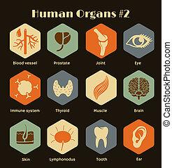 conjunto, de, iconos, humano, órganos, sistemas