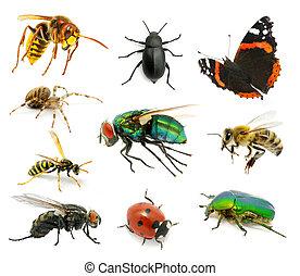 conjunto, de, insectos
