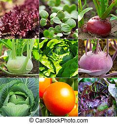 conjunto, de, jardín vegetal, -, rábano, ensalada, col, tomate, colinabo