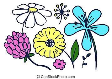 conjunto, de, lindo, flores coloridas, vector, ilustración