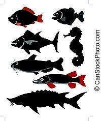 conjunto, de, peces