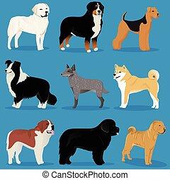conjunto, de, perros