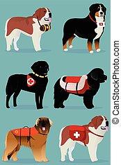 conjunto, de, perros, rescatadores