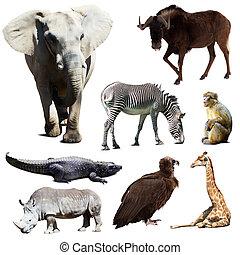 conjunto, de, pocos, africano, animales