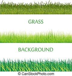 conjunto, de, primavera, hierba verde, horizontal, borders., hierba verde, colección, blanco, plano de fondo