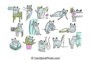 conjunto, de, problema, con, gato, behavior., gatito,...