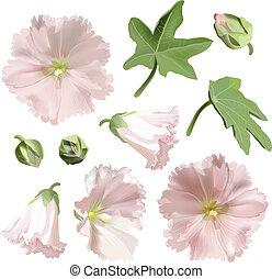conjunto, de, rosa, malva, flores, blanco, fondo.