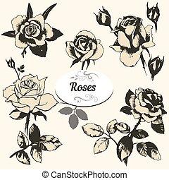 conjunto, de, rosas