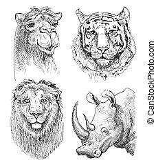 conjunto, de, safari, cabeza, animales, negro y blanco,...