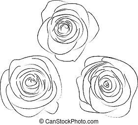conjunto, de, tres, dibujos, de, rosas