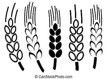 conjunto, de, trigo, iconos, vector