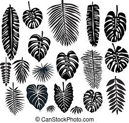 conjunto, de, tropical, hojas