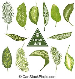 conjunto, de, tropical, hojas, -, para, diseñe elementos, scrapbooking, -, en, vector