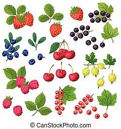 conjunto, de, vario, estilizado, fresco, berries.