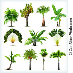 conjunto, de, vario, palma, árboles., vector