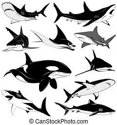 conjunto, de, vario, tiburones, tatuaje