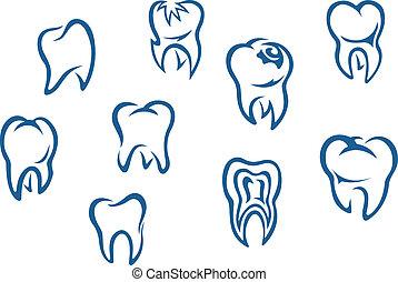 conjunto, dientes humanos