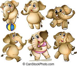 conjunto, elefante