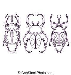 conjunto, escarabajo, insecto, contorno, bichos