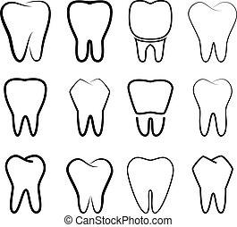 conjunto, estabilizado, dientes