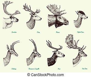 conjunto, gacela, venado, hueva, ciervo, dibujado, más ...