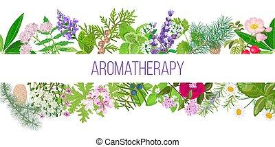 conjunto, grande, ornamento, aceite de aromatherapy, texto, popular, plants., bandera, esencial