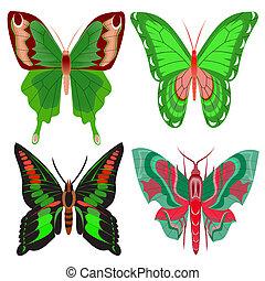 conjunto, hermoso, mariposa, blanco, plano de fondo