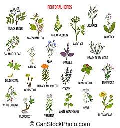 conjunto, hierbas, pectoral