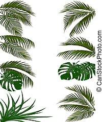 conjunto, hojas verdes, de, tropical, palma, árboles., monstera, agave., aislado, blanco, fondo., ilustración