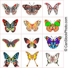 conjunto, insecto, mariposas, en, un, fondo blanco